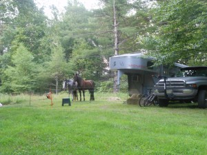 The horses at their facilities at Peggy's Cabin