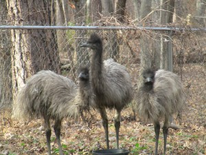 EMU_0700