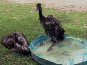 Emus bath 6