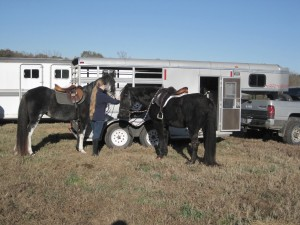 Wally and Cleo at the Red Mountain Hounds hunter pace in Nov. 2013