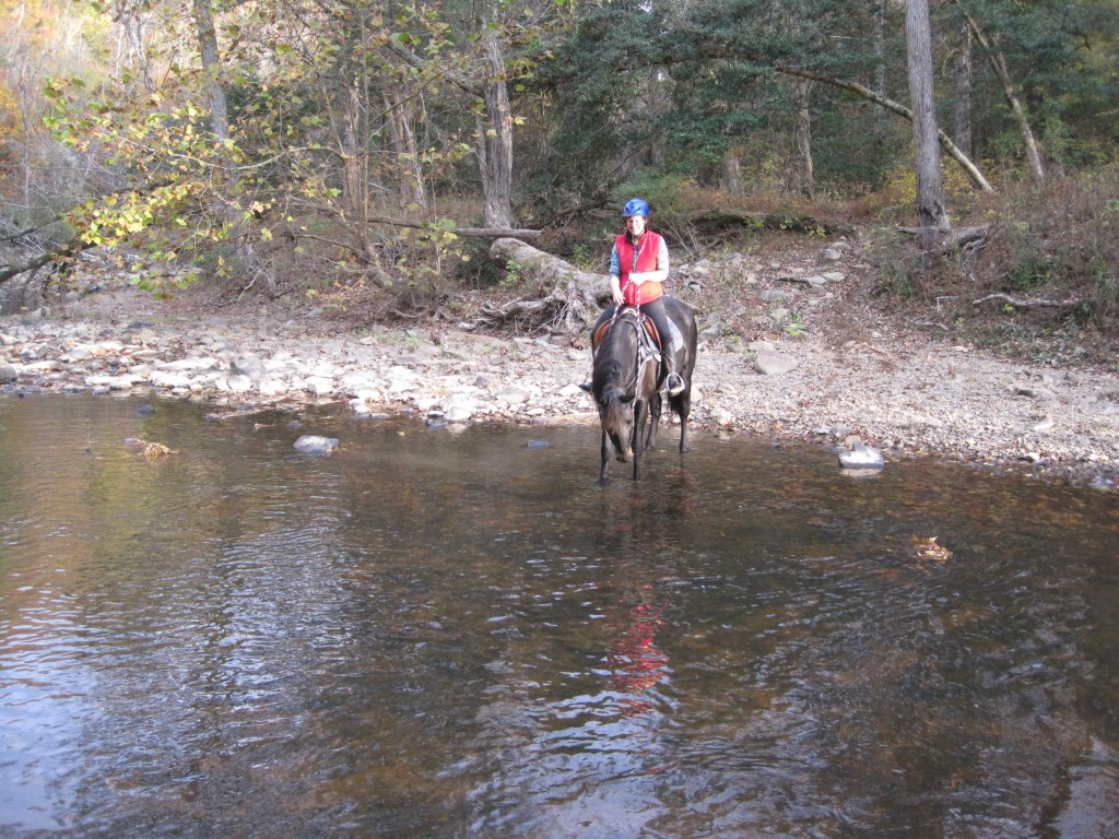 Horse and rider at Little River in Hill Forest