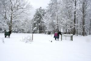 Snowpocalypse 2015 - 2