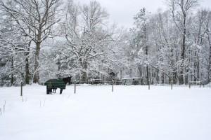 Snowpocalypse 2015 - 3