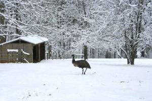 Snowpocalypse 2015 - 4