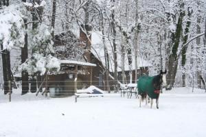 Snowpocalypse 2015 - 5