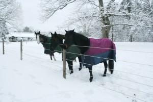 Snowpocalypse 2015 - 7