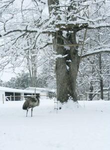 Snowpocalypse 2015 - 8