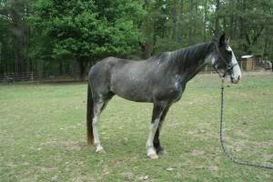 Horses April 2015 - 4