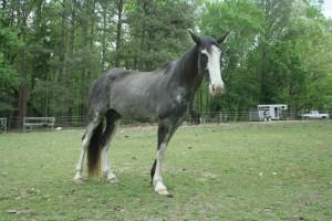 Horses April 2015 - 5