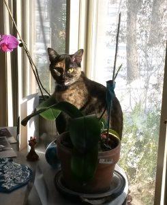 Azi, the cat