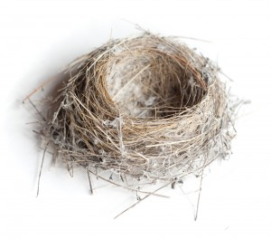 Small birds nest